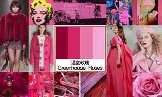2020年初秋色彩:温室玫瑰